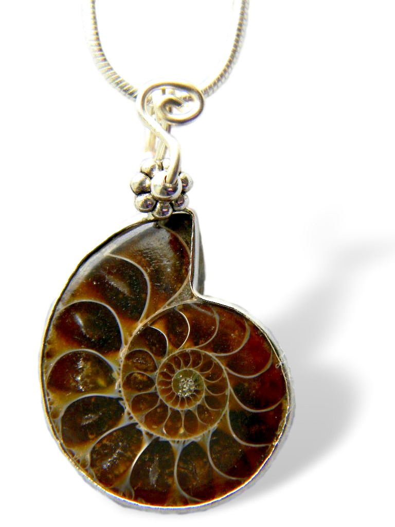 DSCN1376 Fossil Pendant with Handmade Bail #2_clipped_rev_3